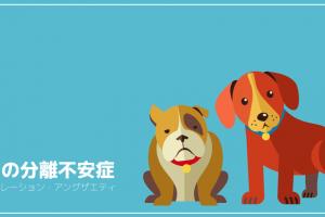 犬の分離不安症(セパレーション・アングザエティ)