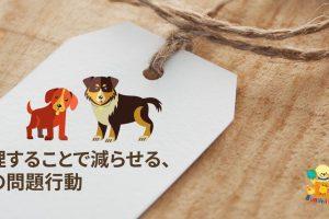 管理することで減らせる、犬の問題行動