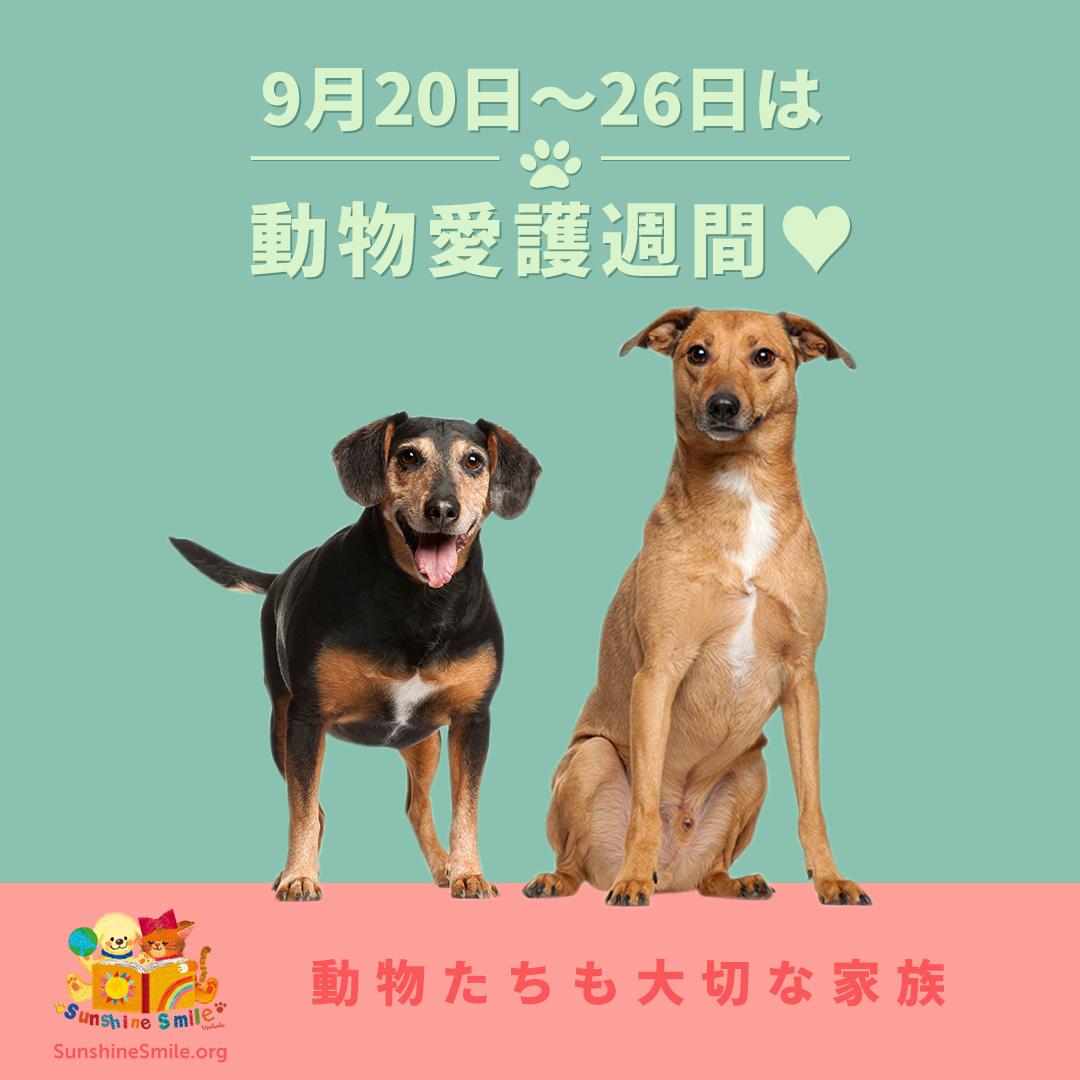 9月20日〜26日は動物愛護週間♥動物も大切な家族
