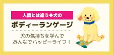 犬のボディーランゲージ☆犬の気持ちを学んでみんなでハッピーライフ!