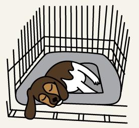 crate-beagle