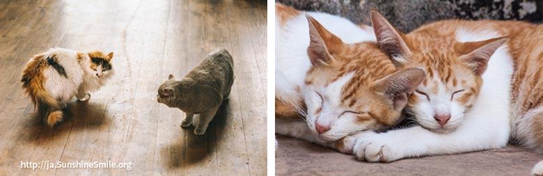 初めて会う猫と一緒に眠る猫