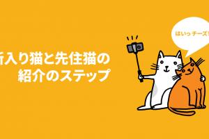 新入り猫と先住猫の紹介のステップ