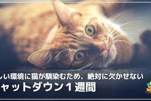 新しい環境に猫が馴染むため、絶対に欠かせないシャットダウン1週間