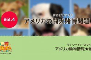 アメリカの闘犬賭博(ドッグファイト)問題|アメリカの動物事情動画 by サンシャインスマイル