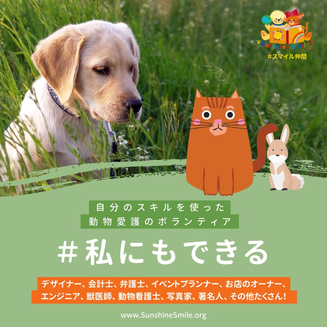 自分のスキルを使った動物愛護のボランティア活動