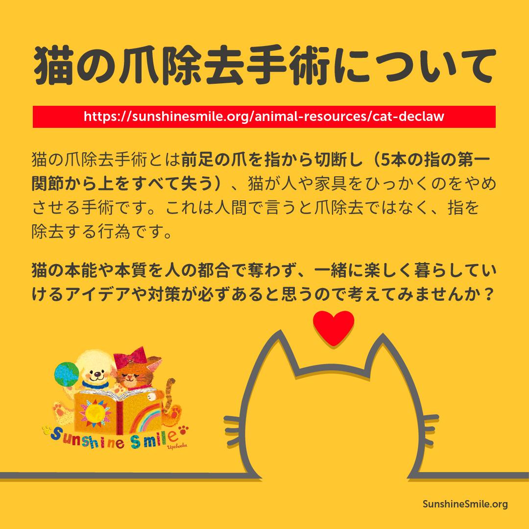 猫の爪除去手術について