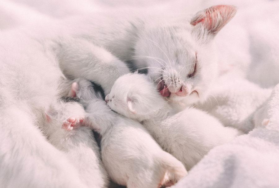 お母さん猫と子猫