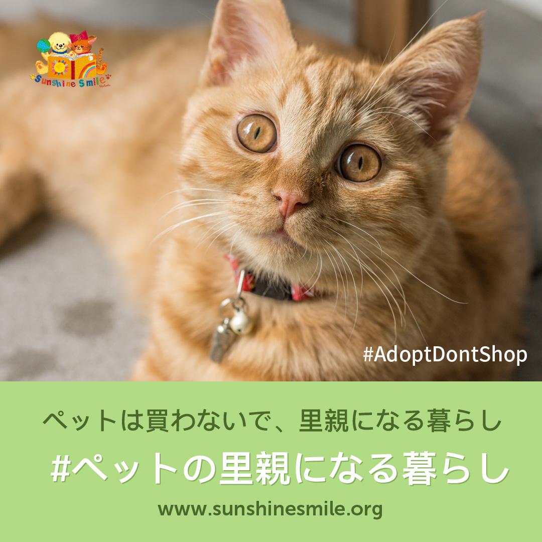 ペットは買わないで、里親になる暮らし