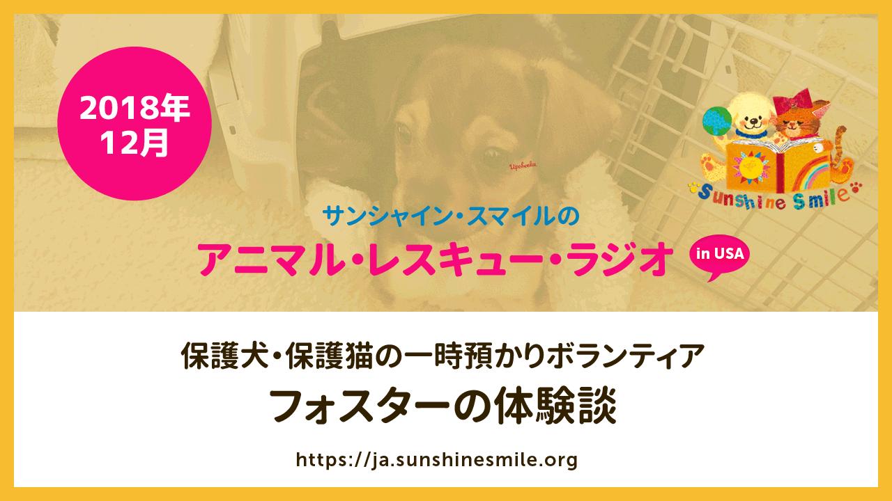 保護犬・保護猫の一時預かりボランティア、フォスターの体験談