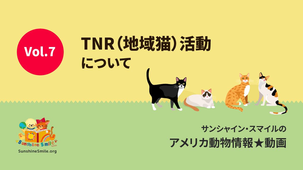 第7回 TNR活動について