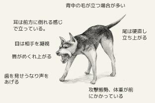 アグレッシブな攻撃モードの犬の身体的特徴