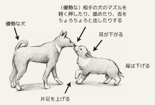 挨拶をする犬たち