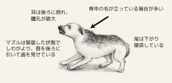 防衛的な攻撃モードの犬の身体的特徴