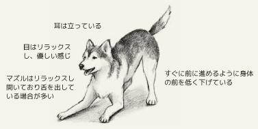 遊びに誘う犬の身体的特徴