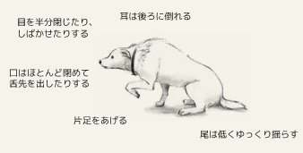 サブミッシブ(降伏状態)の犬の身体的特徴